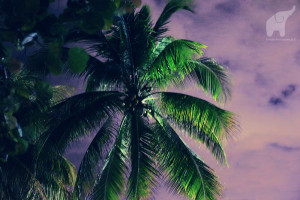 palms-purple